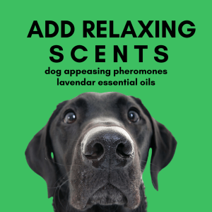 Scents such as lavender, and dog appeasing pheromones are helpful for scared dogs to overcome their separation anxiety.