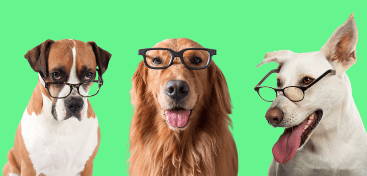 Smart Dogs with glasses