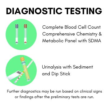 Diagnostic Testing for Kidney Disease in Dogs