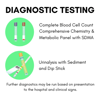 Preliminary Testing for Lepto in Dogs - CBC, Chem, Urinalysis and Dip stick.