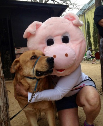 Bruno and Piggy at the 2013 Fiesta Medal Unveiling to help cats and dogs in King William and Lavaca, San Antonio, Texas