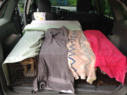 In the Community Cat Carpool program, area cats are humanely trapped, spayed or neutered, and returned to their colonies.