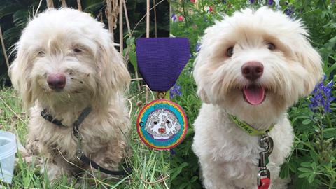 2016 fiesta dog medal