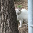 KWA grant will change lives of area cats