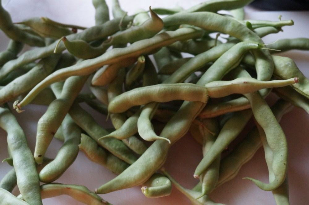 Dilly Beans and Drying Dill (4/6)