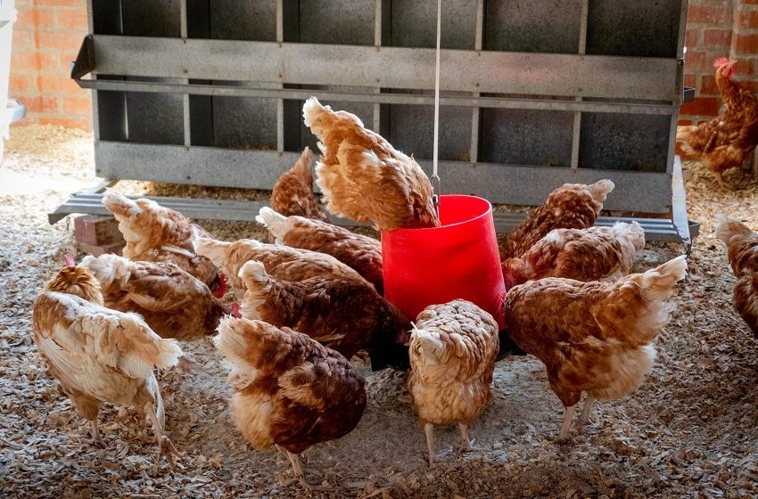 IFC to invest in PE-backed poultry company in East Africa