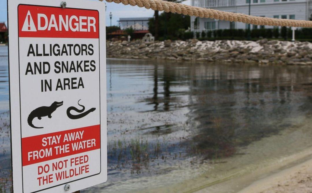 No more reptile jokes at Disney World after tragic alligator attack