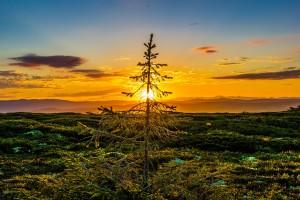 sunset-850877_1920