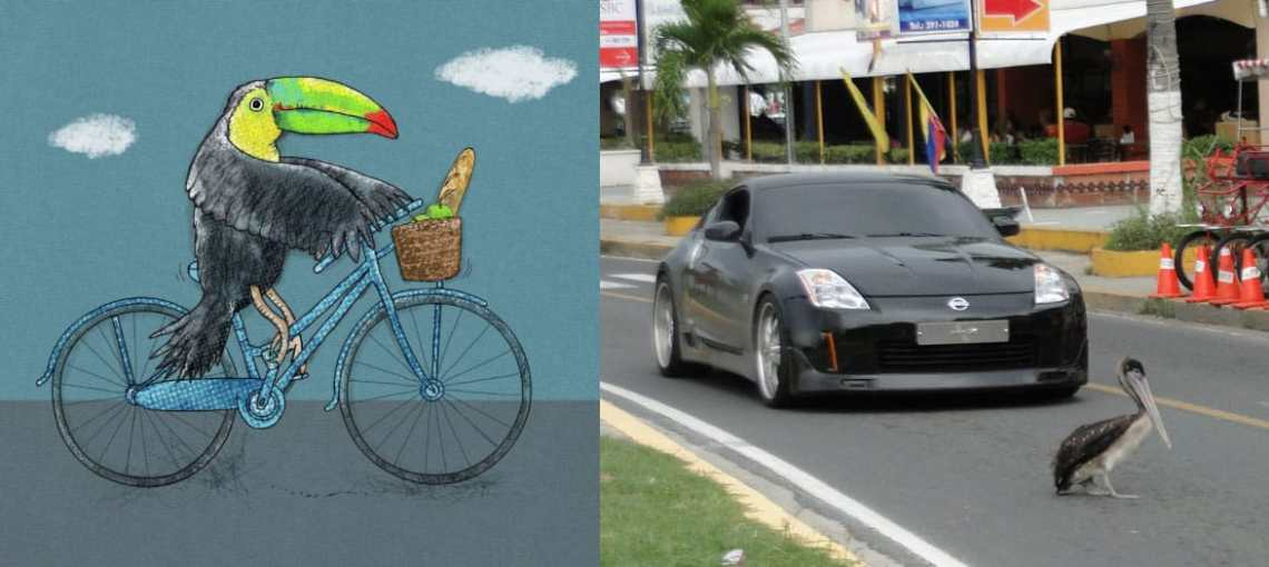 Toucan crossing vs pelican crossing - DVSA theory test