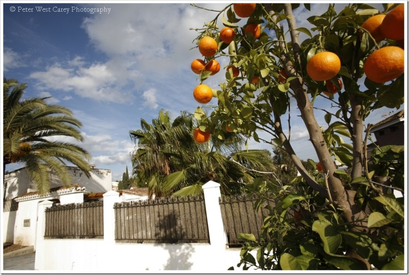 Oranges and Palm Trees, Spain