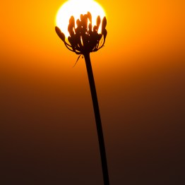 Cupping the sun, California, USA