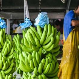 Banana Factory, Costa Rica