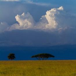 What's Lurking?, Serengeti National Park, Tanzania