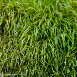 Close Up Understory, Olympic National Park, Washington, USA