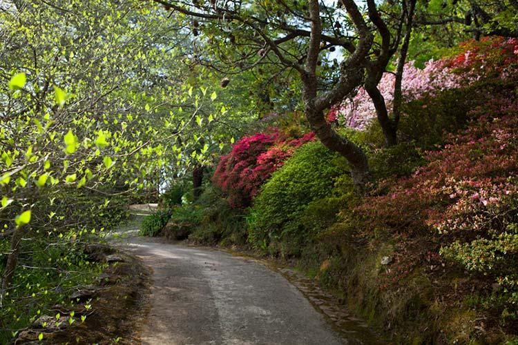 the-carouseleverglades-gardens-spring-azalea-drifts-12_zpsxgpwmoxw