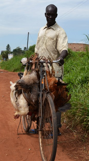 The Acholi people found creative ways to transport all kinds of items on bikes and bodas, including live chickens.