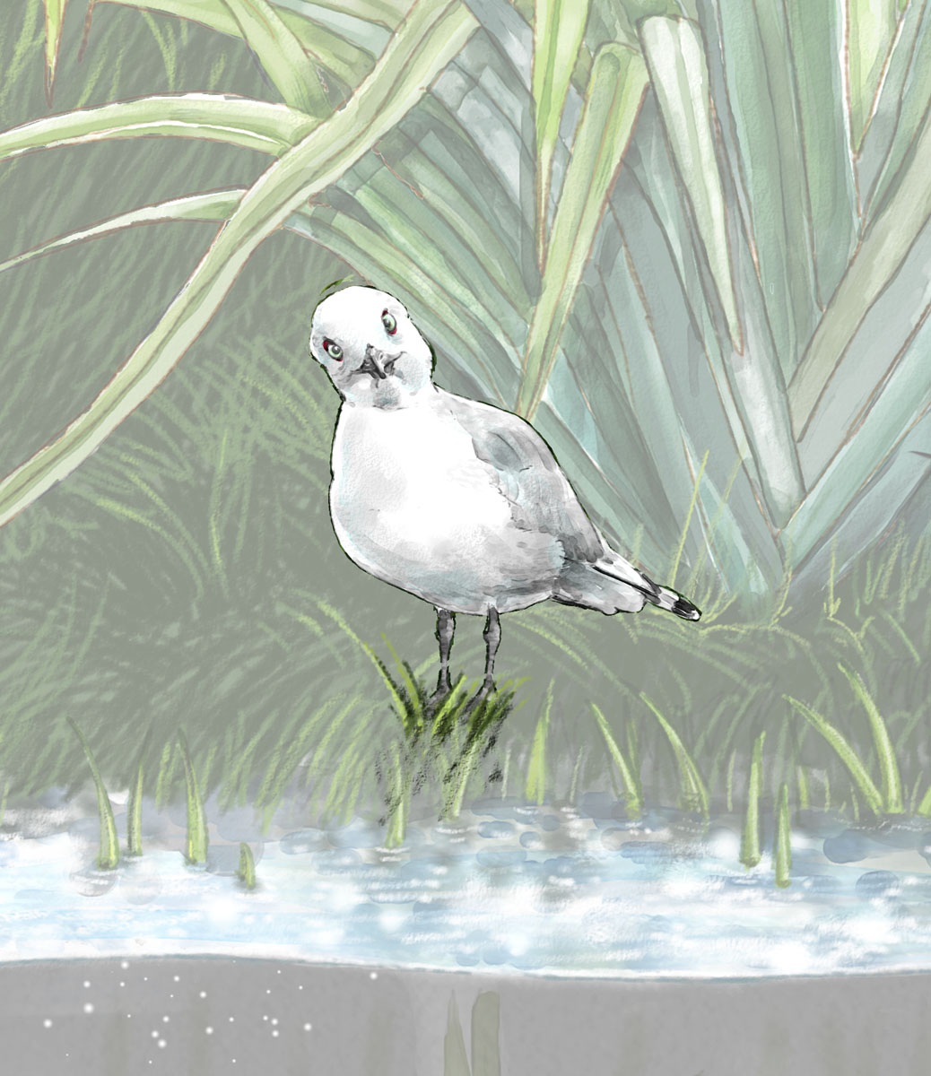 cartoon of black billed gull
