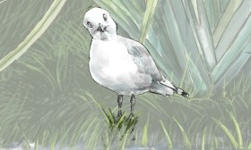 Nature Art- Black Billed Gull
