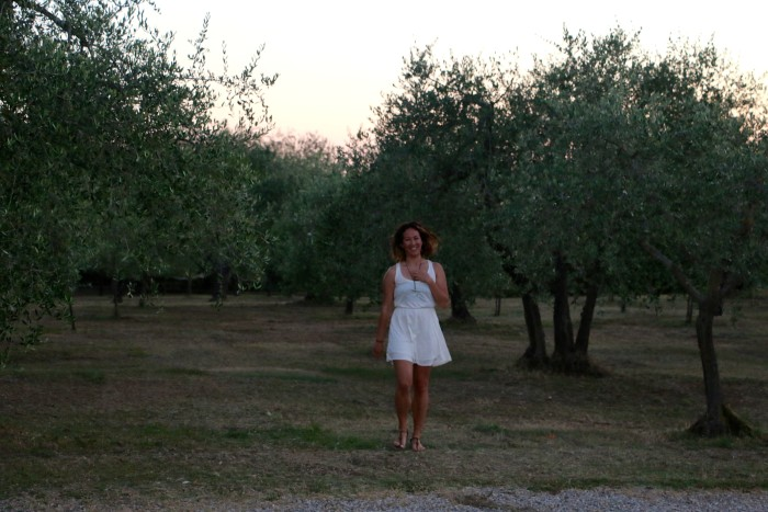Olive trees on the tuscan countryside