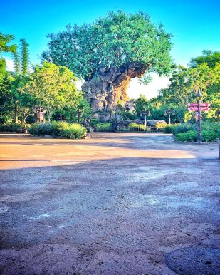 Disney S Animal Kingdom Celebrates The Lion King Protects The Pride The Castle Run