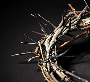 Crown_thorns