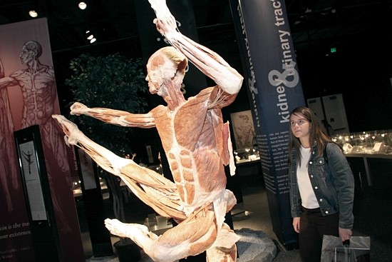 A body sits on display at the Body Worlds exhibit in 2006 at the Science Museum of Minnesota. Dave Hrbacek/The Catholic Spirit