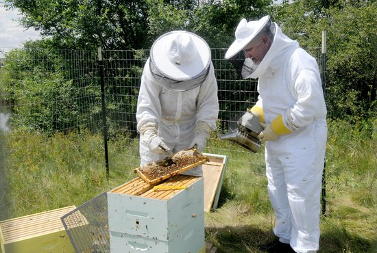 Beekeeper Craig Francois, left, shows Father Paul Jarvis the bees working in the new hive situated near the community garden at his parish, St. Joseph in Rosemount. Dianne Towalski/The Catholic Spirit
