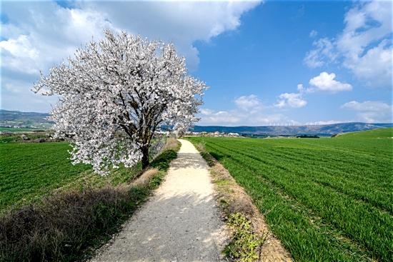 treesfieldroad