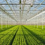 How can we avoid a 'greenhouse faith'?