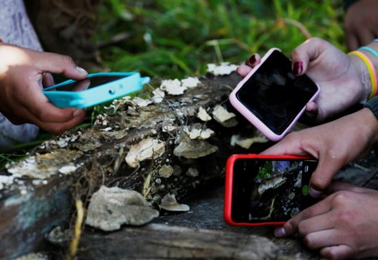Students take photographs of mushrooms in Cota Cota, La Paz, Bolivia, April 29, 2019.