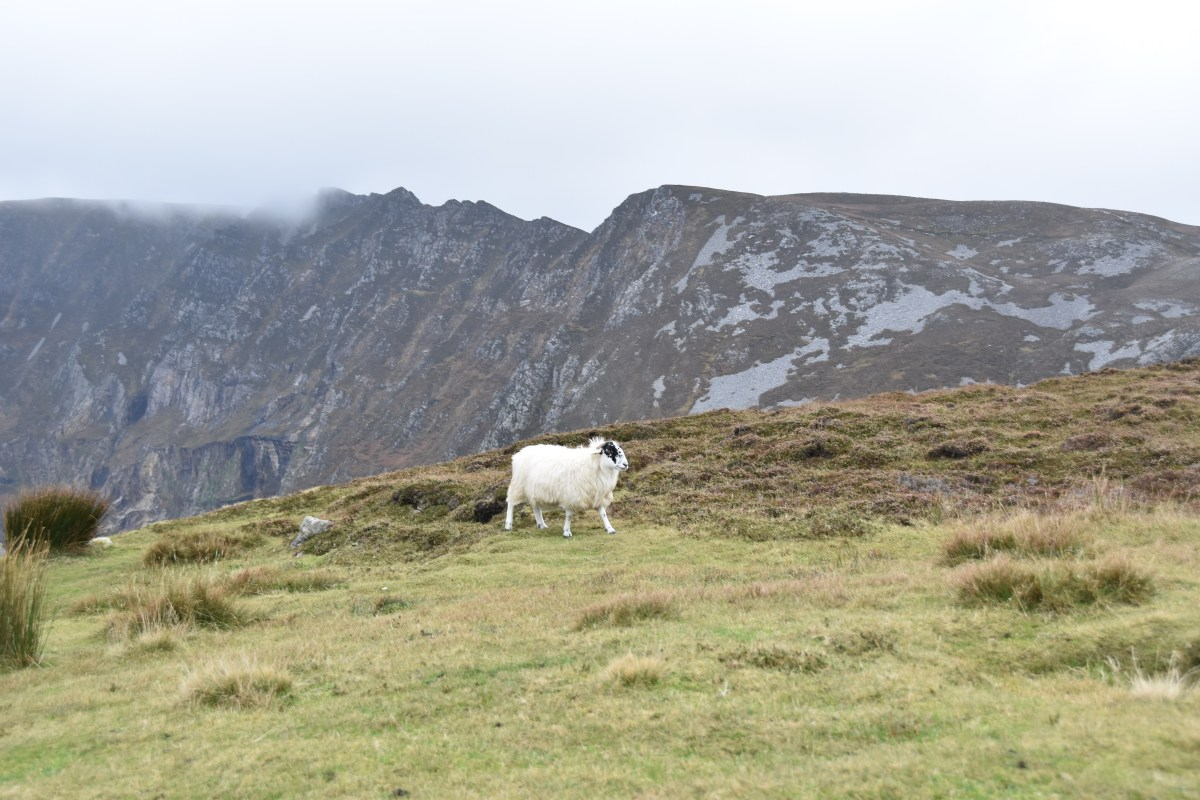 Pilgrimage to Ireland, Day 6: Irish hospitality and Slieve League