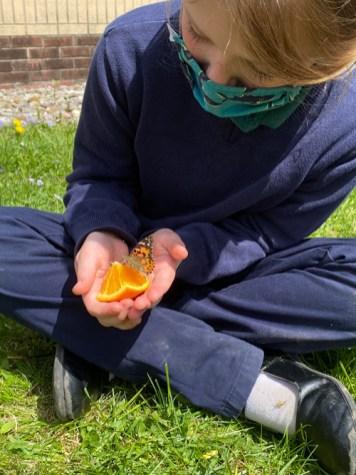 Evelyn Stewart - Slowly emerging marvel: butterflies at  St. Margaret's School