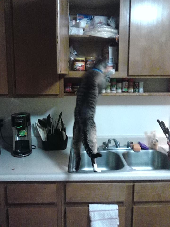 cats in the kitchen cabinets los angeles contest vote for your favourite pom march img