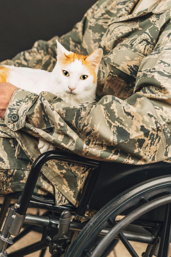 Manfaat Kucing bagi Anggota dinas militer yang cacat memegang kucingnya di kursi roda untuk membantu mengatasi perasaan cemas atau depresi