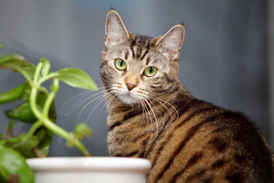 Seekor kucing tabby membintangi kamera