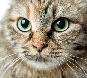 a cat s eyes