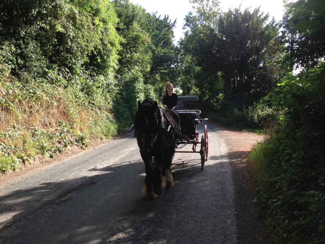 The Cavalry of Heroes - Wedding Carriage, horse driving, country, single, Herefordshire and Wales