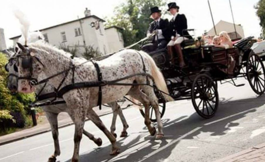 Wedding Horse Drawn Carriage with pair of Appaloosa Horses driven by Marc Lovatt of The Cavalry of Heroes Ltd in a Landau carriage through Gloucestershire