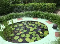 asm lily pond