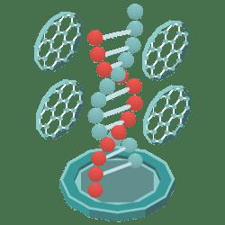 maximum-bioavailability