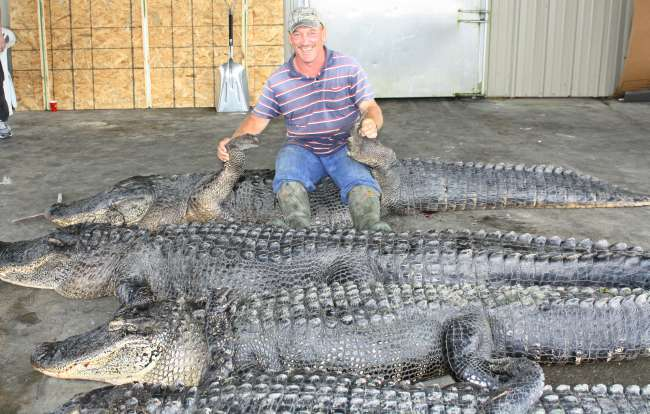 Troy landry and his dead alligators