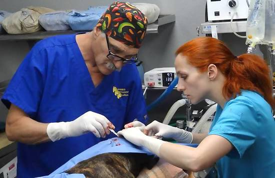 Dr. Jeff Young and his wife Petra Young performing surgery