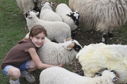 Sheep to Shawl The Center 2017 1