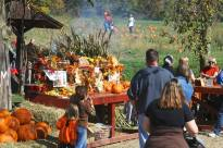 pumpkin patch at fall fest 2014