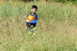 Pumpkins The Center 2018 1