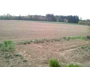 Field of my farmers in Germany