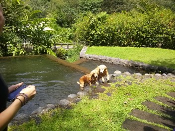 Tropical dogs