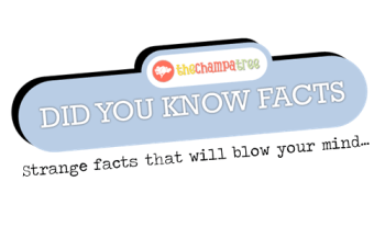 Did You Know Facts – Sleep like a baby