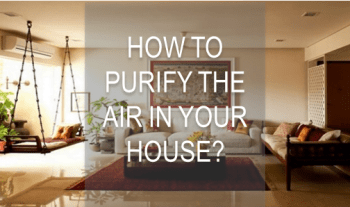 How To Easily Purify The Air Naturally And Ways To Do It