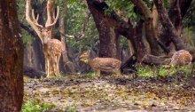 Getaways from Bangalore 04